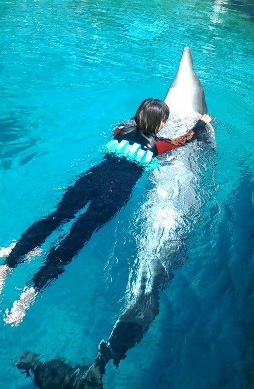 Delfín Zoznamka